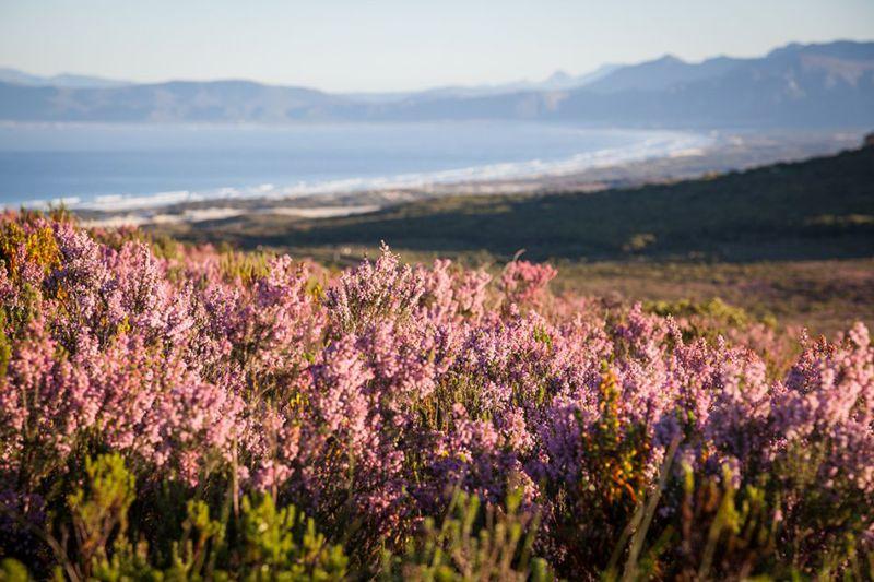 pic149001-reserve-flora-landscape