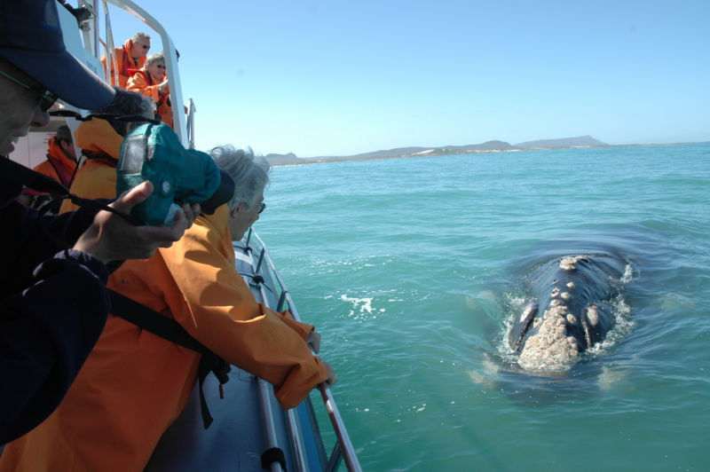 32-activity-whale-watching