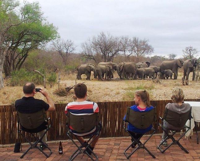 watchingelephants