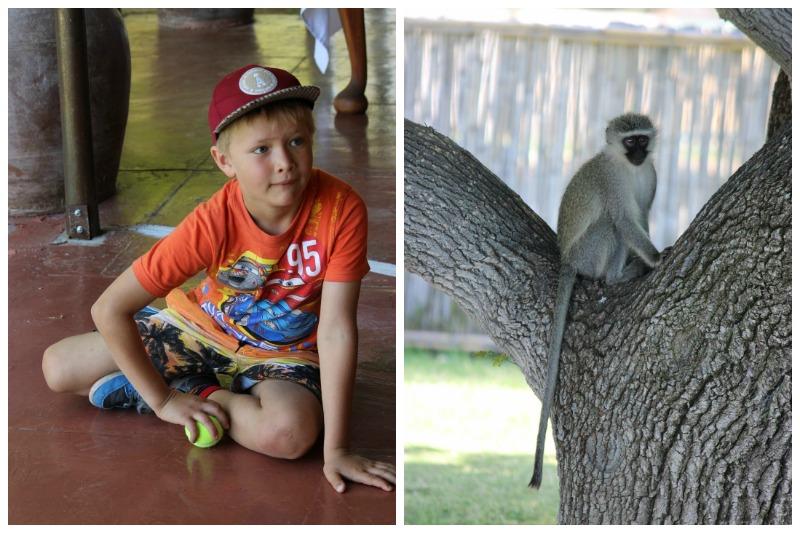 samara monkeys