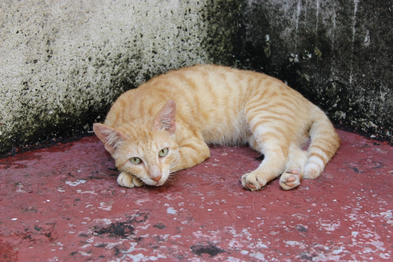 Stone Town Cat