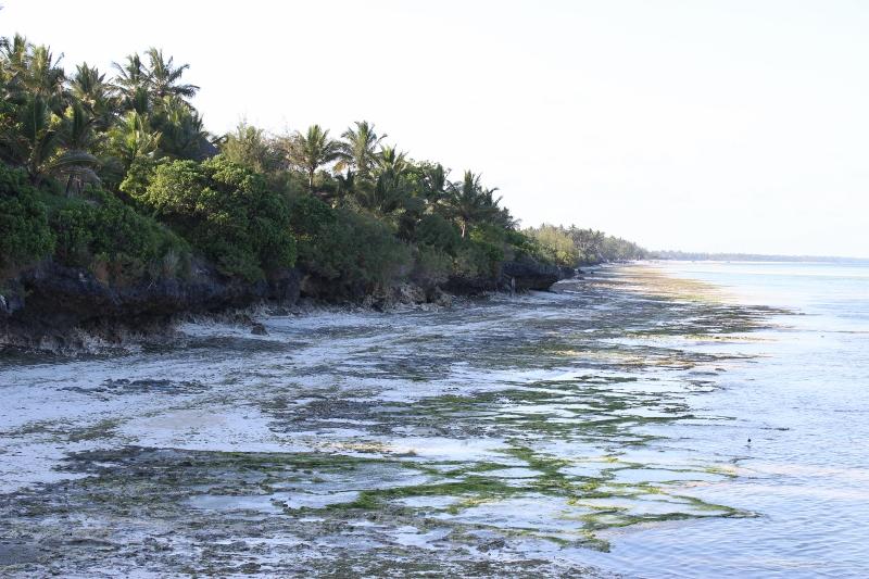 Zanzibar tidal beach view from the Melia Hotel jetty
