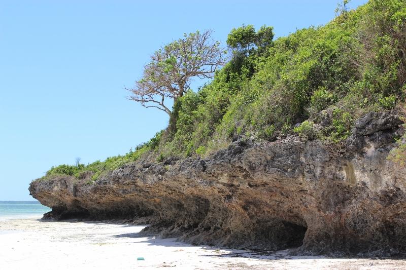 zanzibar coral beach