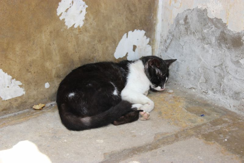 A cat sleeping in a street corner in Stone Town