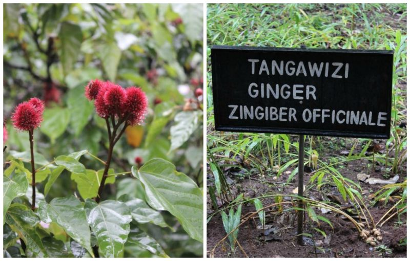 Sign showing ginger spice location