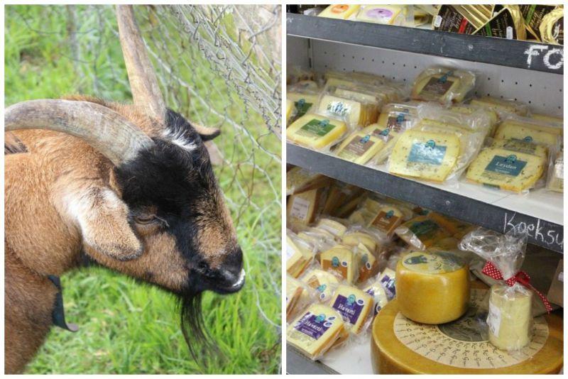 stanford cheese farm 1