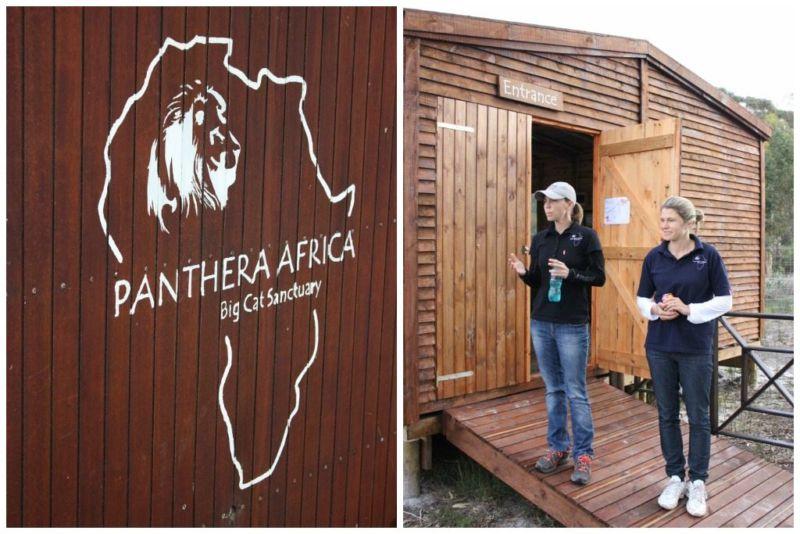 stanford panthera africa
