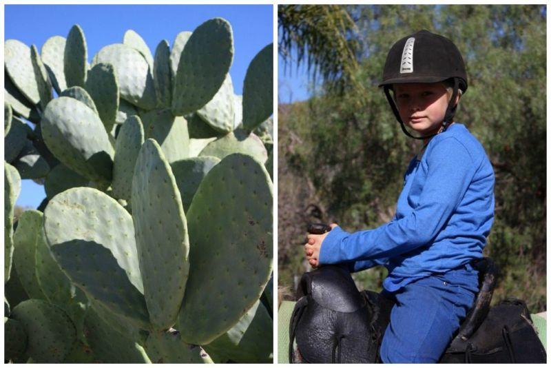 mcgregor horse riding