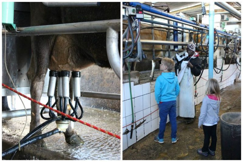 milking shed natures way farm stall