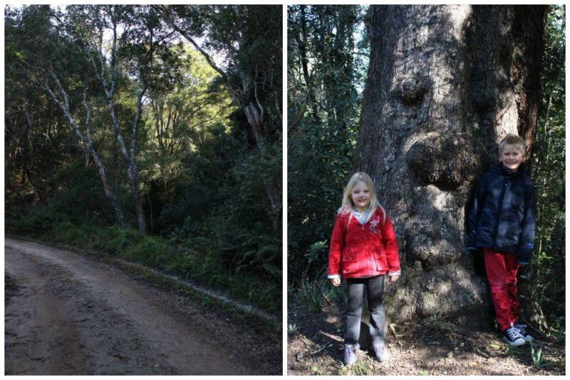 tsitsikamma forest adventure