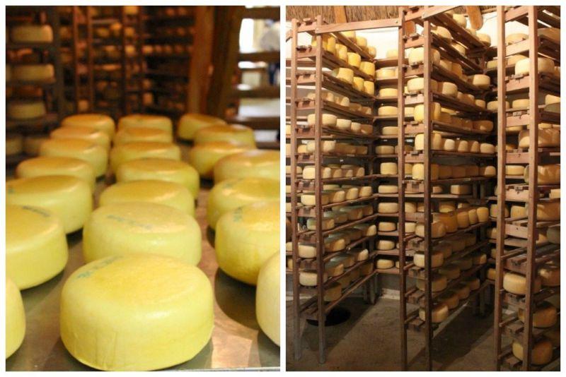 prince albert cheese