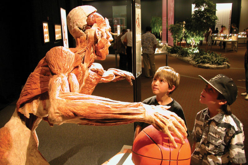 Body Worlds Vital_basketballer with children