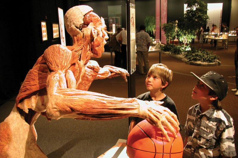 Body Worlds Vital_basketballer with children