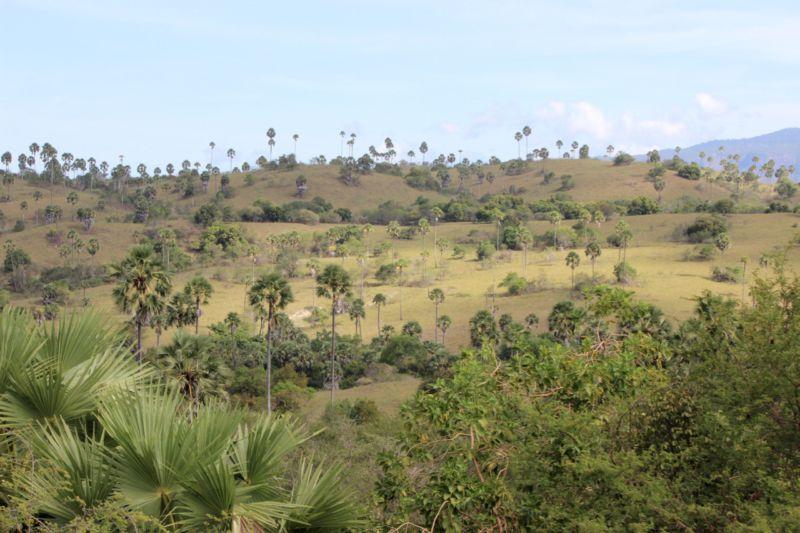 Rinca Island view
