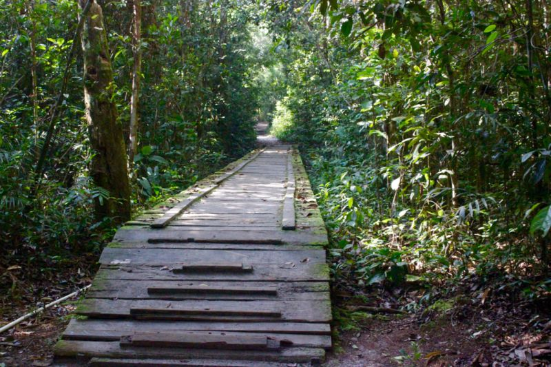 tanjung puting national park
