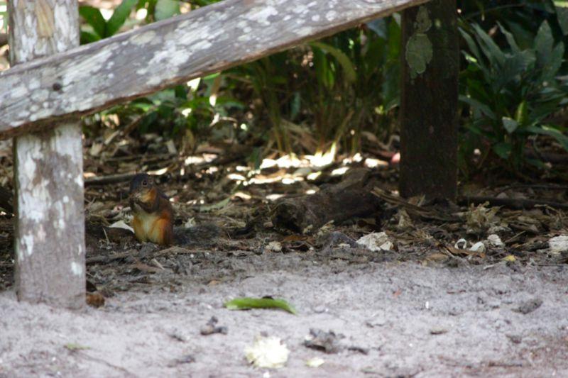 orangutan sanctuary borneo