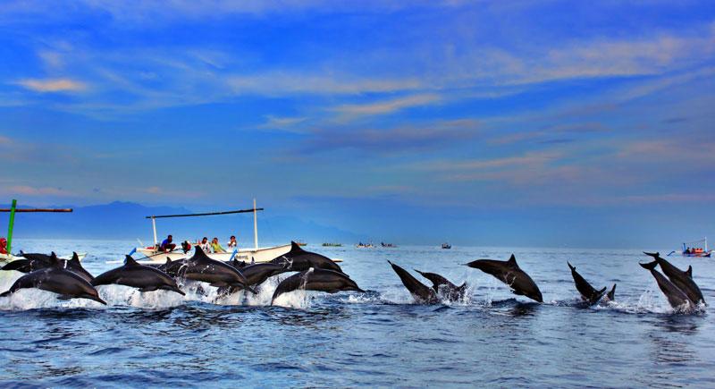 dolphin21