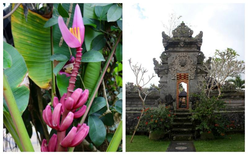 rumah desa garden
