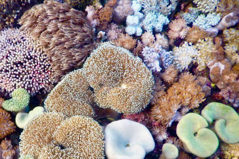coral-reef-wakatobi