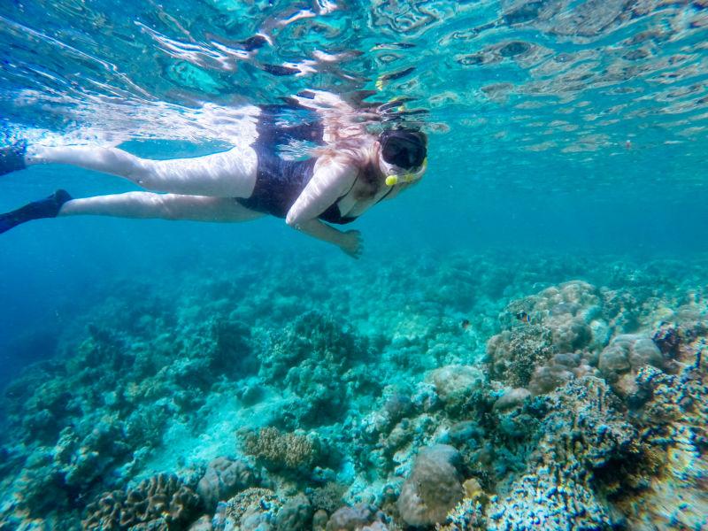 wakatobi coral dive