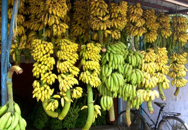 kerala-bananas