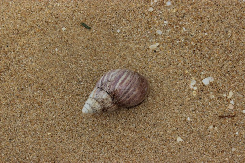 Portuguese Island shell seeking
