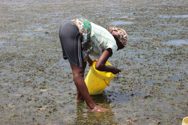Portuguese Island local woman