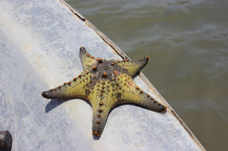 starfish mozambique
