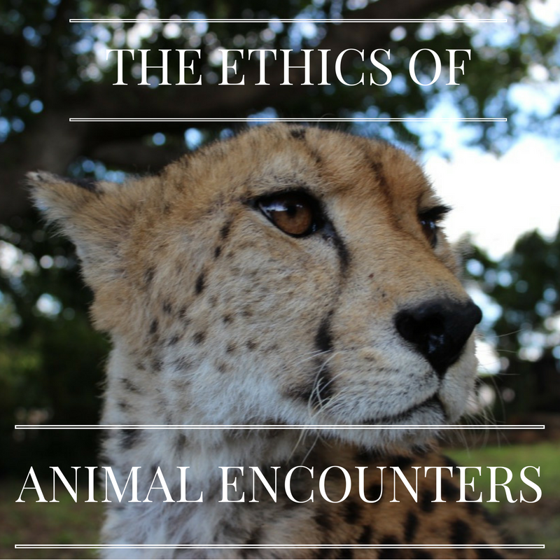 The Ethics of Animal Encounters