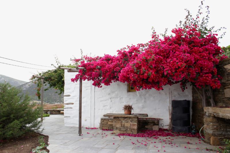 beautiful greek island home