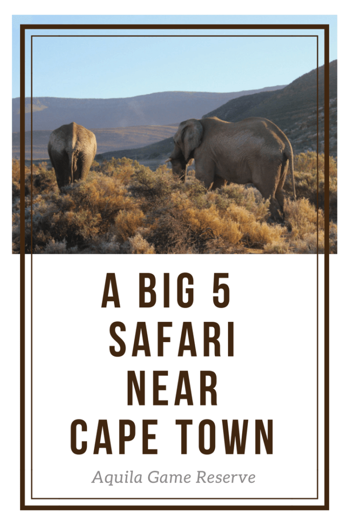 safari near cape town