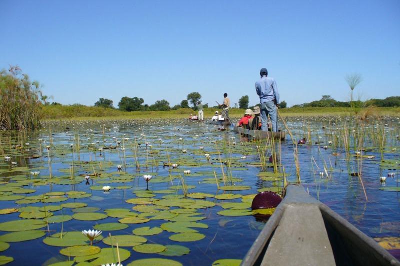 mokoro okavango botswana