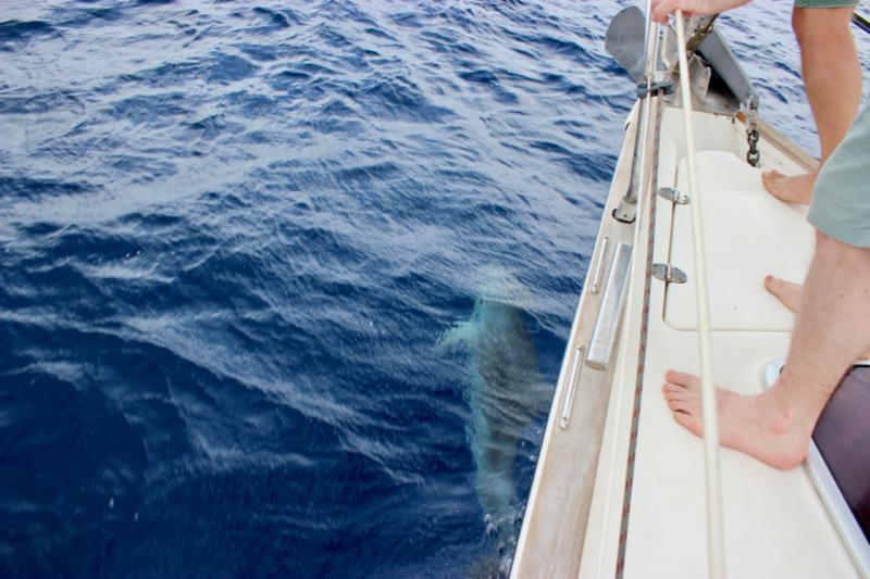 dolphin greece