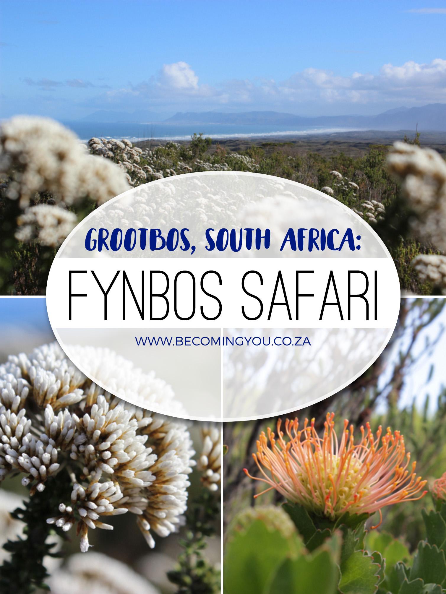 fynbos safari